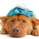 Jak podać psu tabletkę?