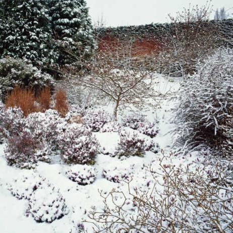 Jak zadbać o rośliny wieloletnie przed nastaniem zimy?
