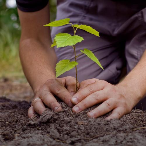 O czym należy pamiętać podczas sadzenia drzewa?