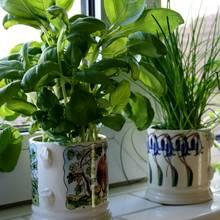 Suszenie i przechowywanie ziół – podstawowe zasady