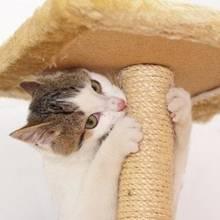 Jak samemu wykonać drapak dla kota?
