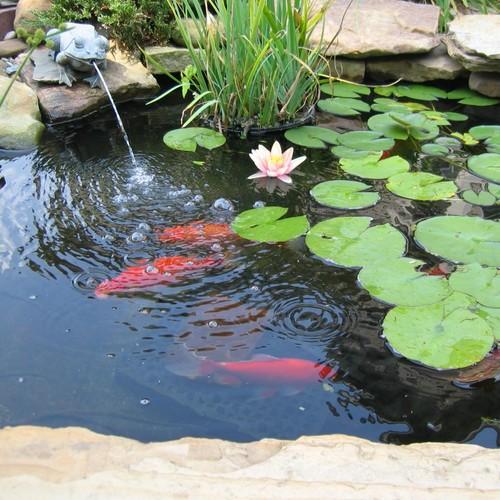 Jak założyć ogród wodny?