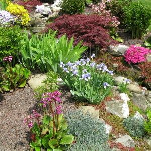 Które rośliny nadają się na skalniak?