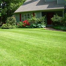 Jak pielęgnować trawnik w sposób ekologiczny?