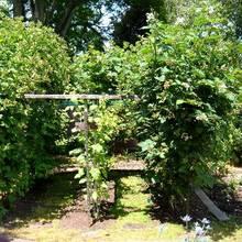 Siedem roślin, które powinno się mieć w swoim jagodniku