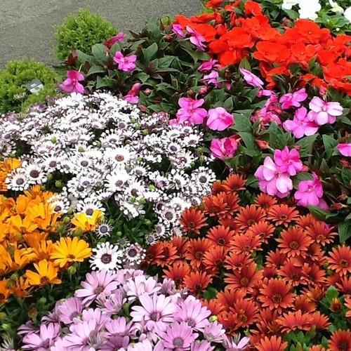 Jak właściwie dbać o rośliny w czasie upałów?