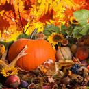 Jakie prace trzeba wykonać w ogrodzie jesienią?