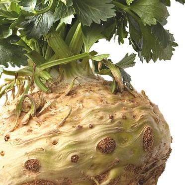Co warto wiedzieć o uprawie selera?