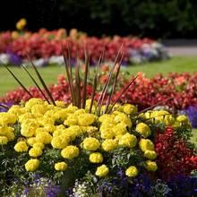 Jak zaplanować rozmieszczenie kwiatów w ogrodzie?