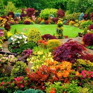 Co może zakwitnąć w naszym ogrodzie?