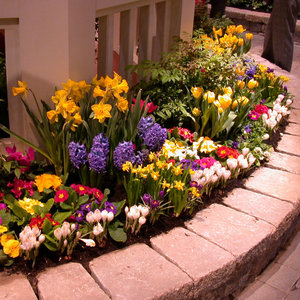 Jak rozmieszczać kwiaty?