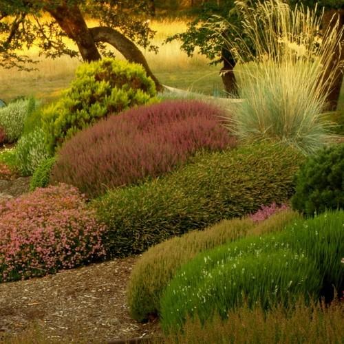 Jak pielęgnować wrzosowisko w ogrodzie?