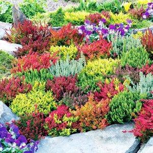 Jakie rośliny posadzić?