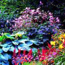 Piękne barwy w ogrodzie przez cały sezon – jak to zrobić?