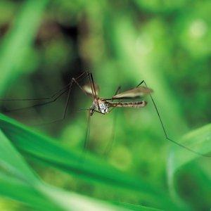 Skuteczne metody na komary w ogrodzie