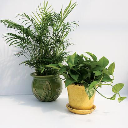 Na jakie rośliny doniczkowe warto się zdecydować?
