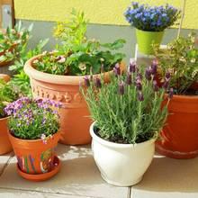Jak uprawiać zioła w ogrodzie?