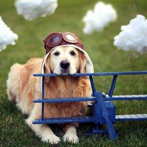 Jak przygotować psa do podróży samolotem?