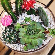 Jak założyć domowy ogródek z sukulentami?