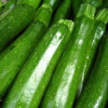 Uprawa cukinii – podstawowe zasady
