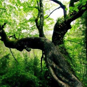 Po czym poznać, ile lat ma drzewo?