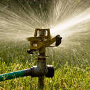 Jak gospodarować wodą w ogrodzie?