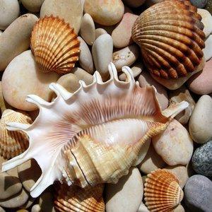 Pamiątki znad morza