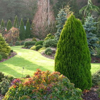 Jak zasadzić tuje w ogrodzie?