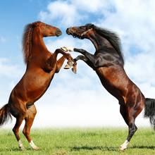 Co warto wiedzieć o rodzajach umaszczenia koni?