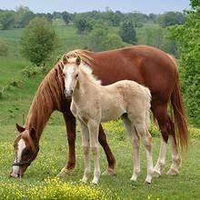 Co warto wiedzieć o rasach koni?