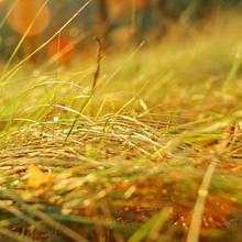 Jak poprawnie dbać o trawnik jesienią?
