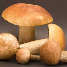 Zasady poprawnego przechowywania grzybów