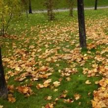 Jak zadbać o trawnik na jesieni?