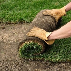 Jak uzupełnić łyse miejsca na trawniku?