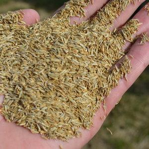 Przygotowanie nasion