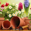 Jakie prace trzeba wykonać w ogrodzie na wiosnę?