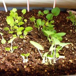 Wysiew i sadzenie