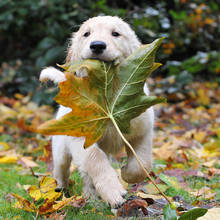 Jak pielęgnować psa jesienią?