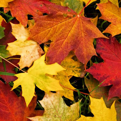 Jak ozdobić materiał odbiciem jesiennych liści?
