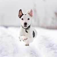 Jak pielęgnować psa w okresie zimy?