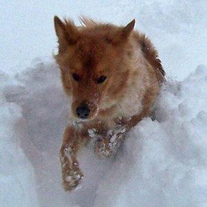 Jak dbać o psie łapy?