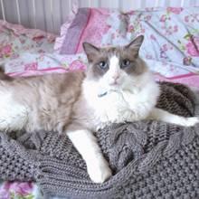 Jak zrobić ciepłe posłanie dla kota ze starej bluzy?