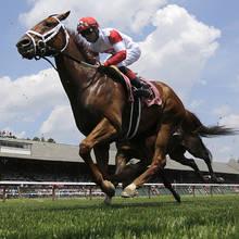 Co warto wiedzieć o sportach konnych?