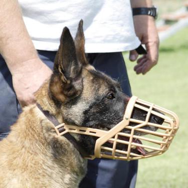 Jaki kaganiec będzie najlepszy dla twojego psa?