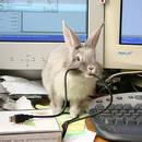 Co zrobić, by królik nie pogryzł kabli?