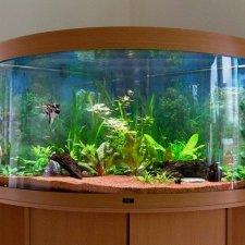 Jak utrzymać porządek w akwarium?
