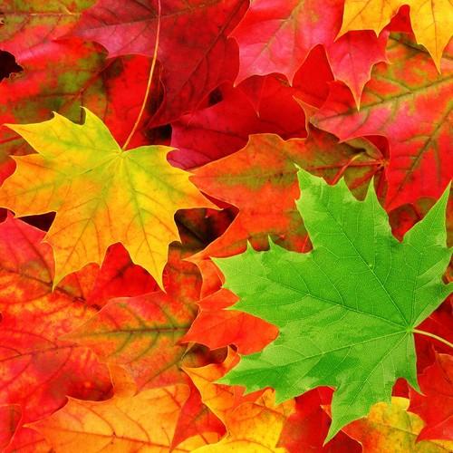 Sposób na utrwalenie koloru jesiennych liści