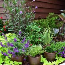 Zasady dbania o rośliny doniczkowe