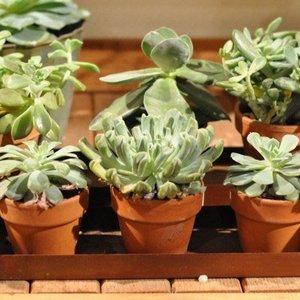 Odkurzanie roślin