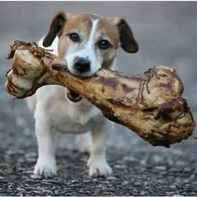 Czy kości są zdrowe dla psa?